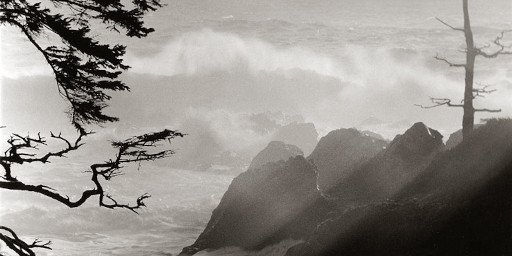 Dian McCreary Photography 57-Wld Pacific Trail 8