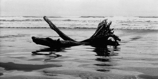 Dian McCreary Photography 59-Driftwood Log Wick Beach 3