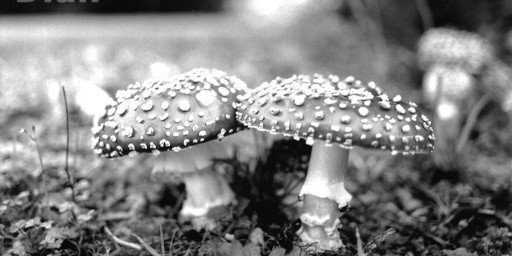 Dian McCreary Photography 65-Feary Realm Amanita
