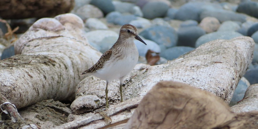 Shore Bird at Reef Point Oceanfront B&B