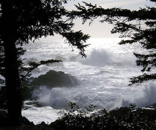 Storm Watching on Wild Pacific Trail